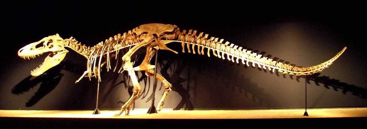 Esqueleto completo de un Tyrannosaurus