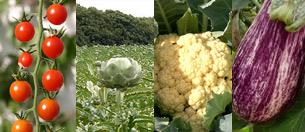 Las hortalizas