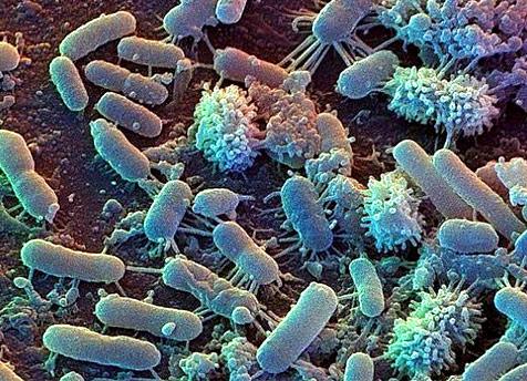 Bacterias de la tierra