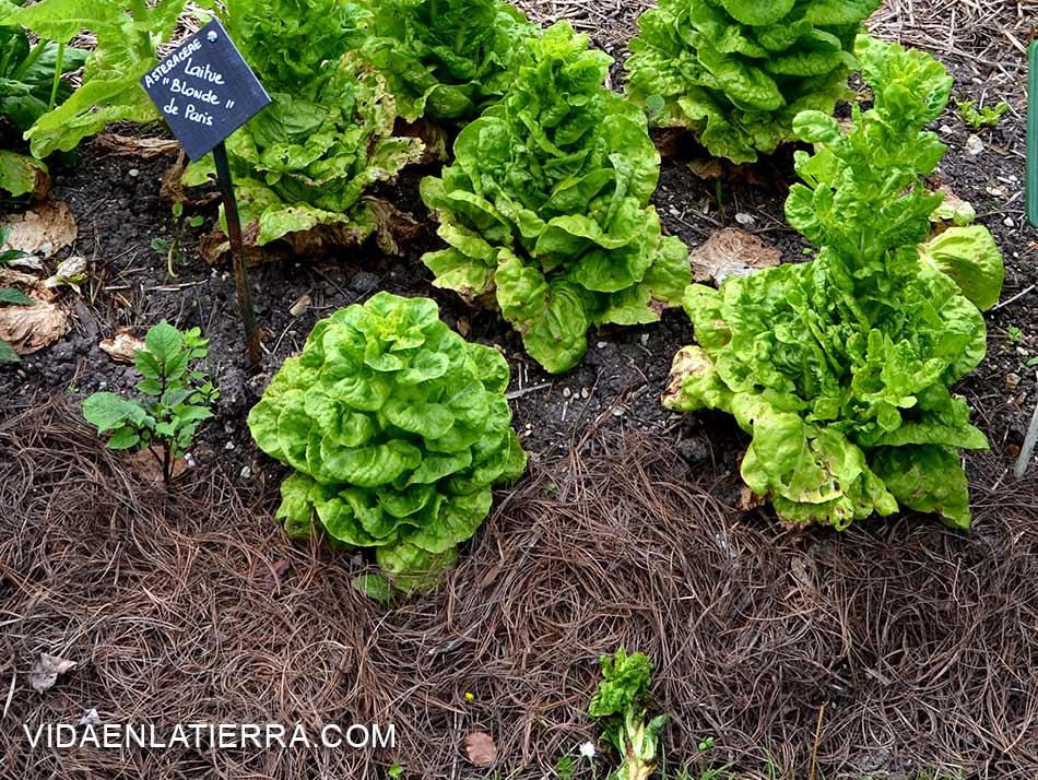 Vida en la tierra la materia org nica de nuestros suelos for Suelo organico para dibujar