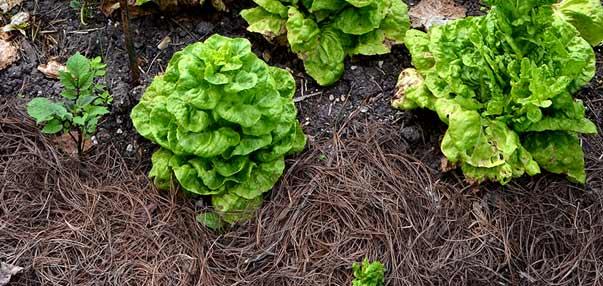 Materia orgánica de nuestros suelos