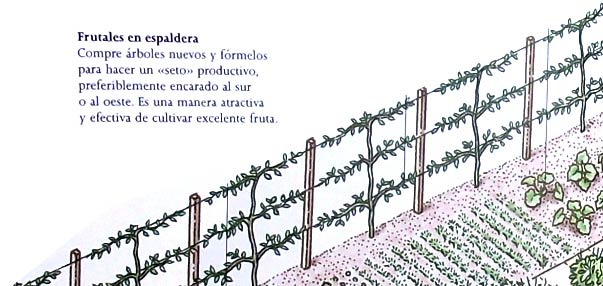 Soportes de alambre para las plantas trepadoras
