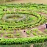 cultivar en circulo