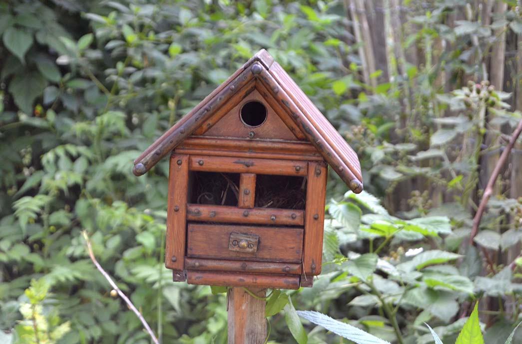casita pájaros