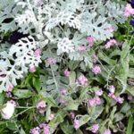 asociar plantas