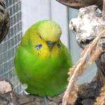 Pájaros en invernaderos