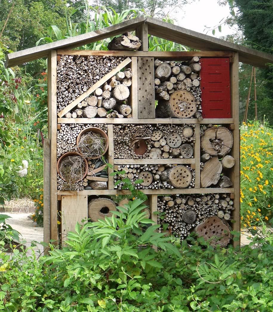 insectos viviendo en maderas