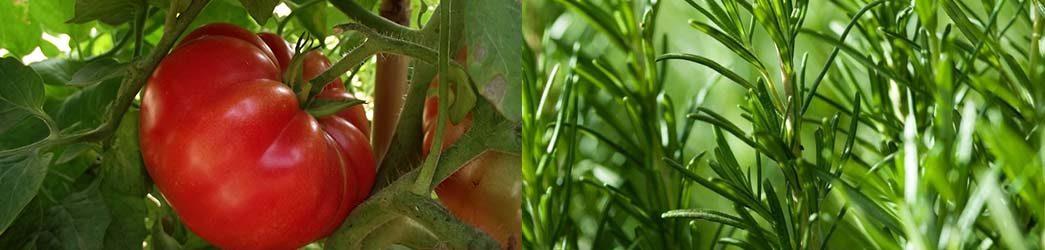 plantas compañeras