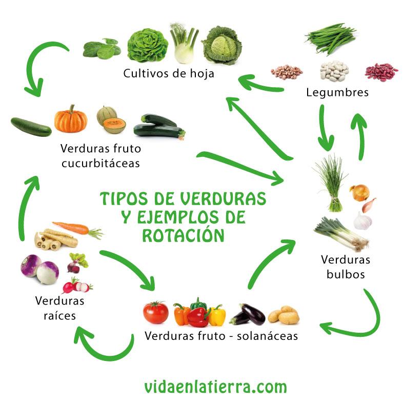 rotación cultivo verduras