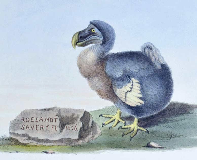ilustración pájaro dodo