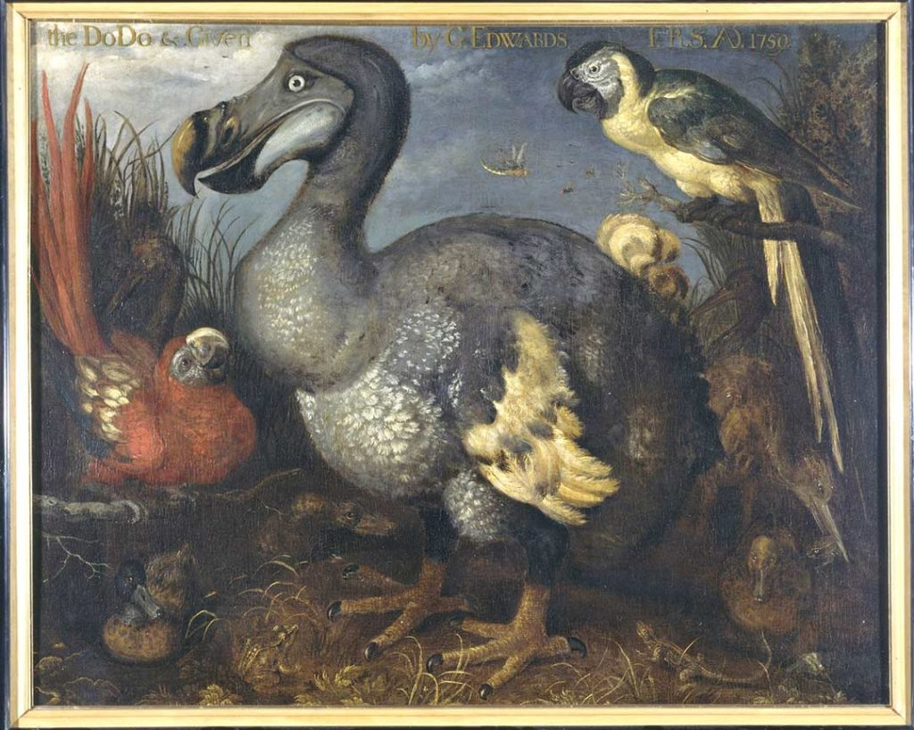 pintura pájaro dodo